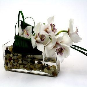 Stylish Cymbidium Orchid