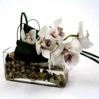 Stylish Cymbidium Orchid